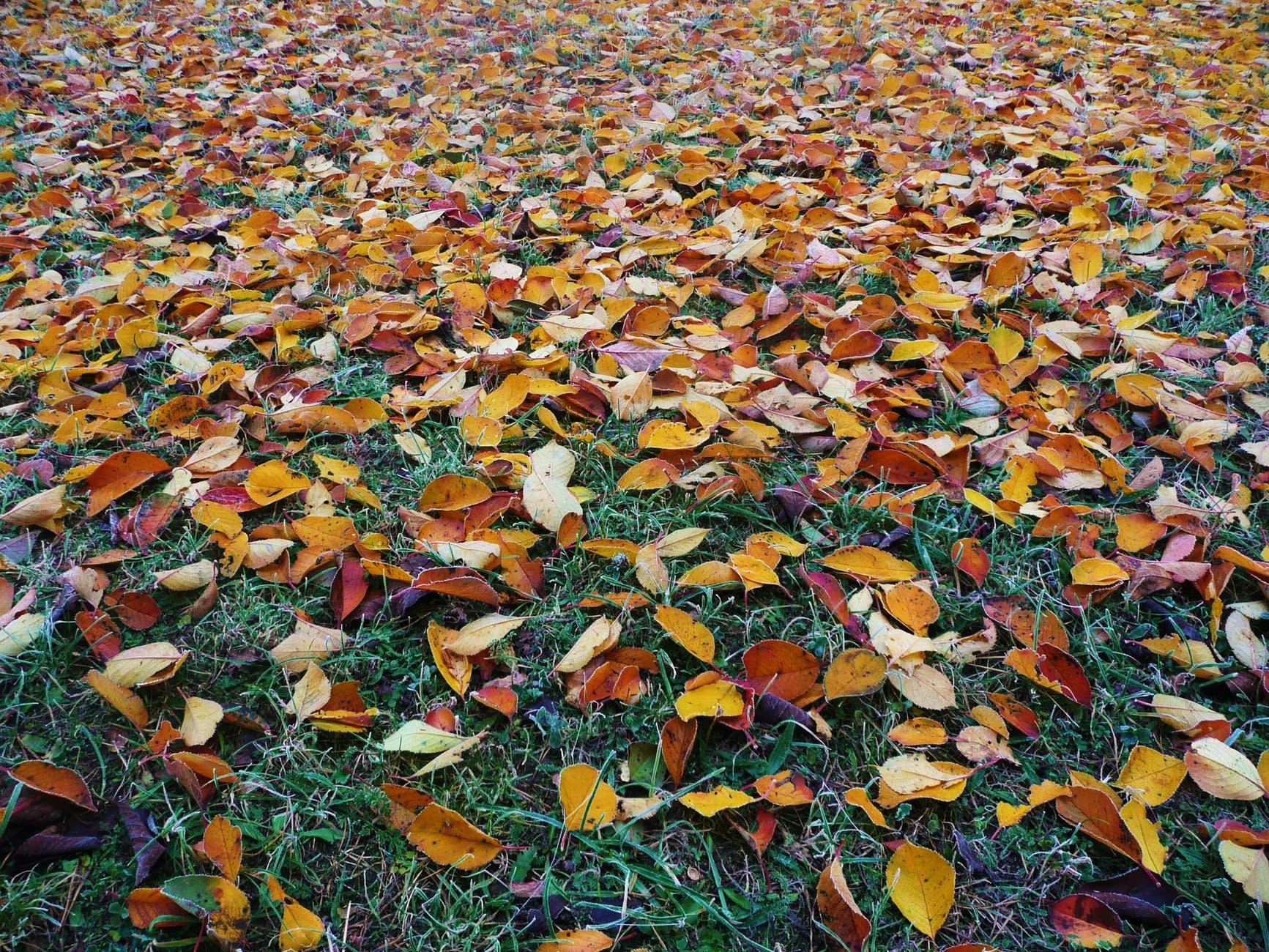 abstract autumn autumn colours beautiful